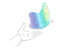 2 New Metamorphosis Butterfly