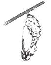 Weaving the Chrysalis 3